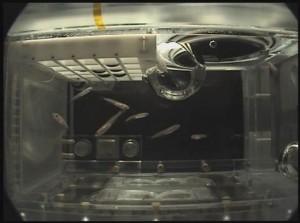 The above image shows an Aquatic Habitat (AQH) specimen chamber housing Medaka fish for study. (JAXA)