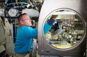NASA astronaut Butch Wilmore setting up the Rodent Reseach-1 Hardware in the Microgravity Science Glovebox (MSG) aboard the International Space Station. (NASA)