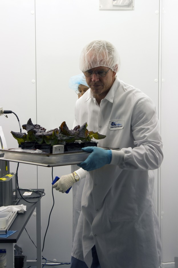 Plants Harvested as Part of Station Experiment