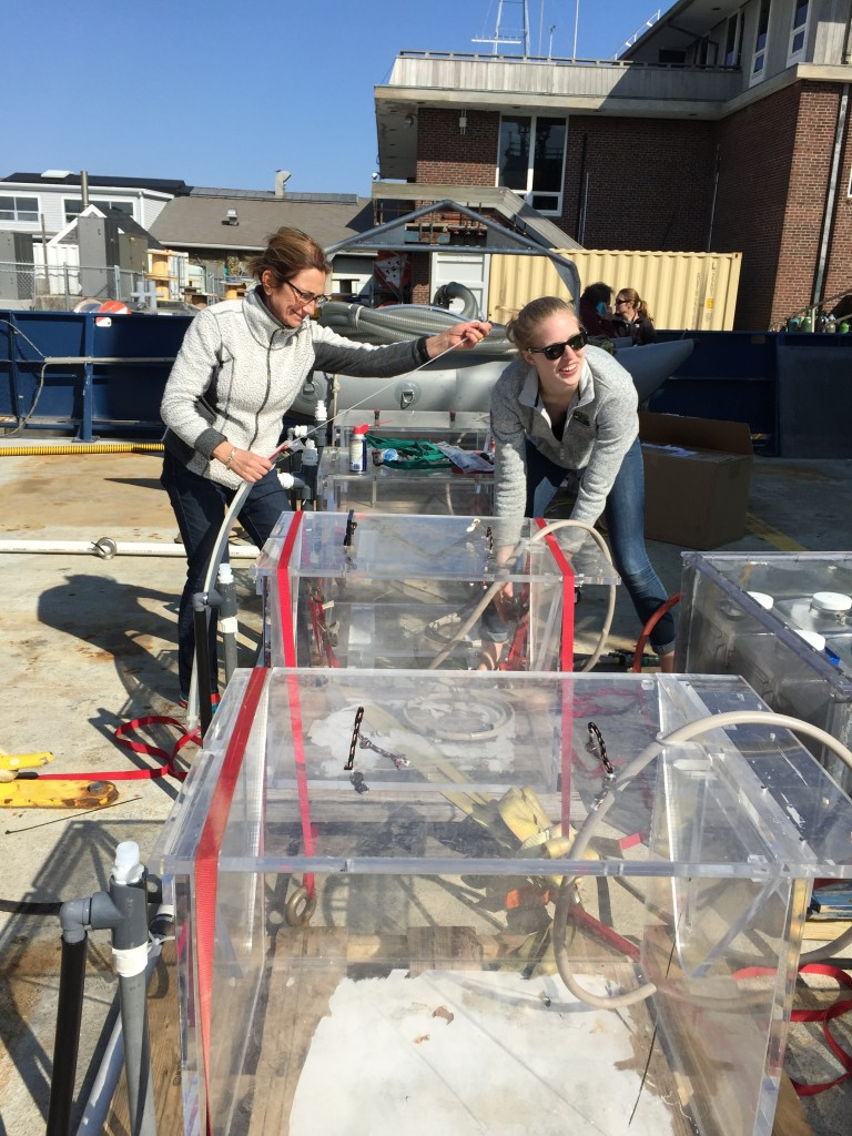 Françoise Morison (left) of the University of Rhode Island and Caitlin Russell, a former intern at the University of Rhode Island, secure incubators to be used for measuring phytoplankton growth rate under various light levels and their consumption by single-celled organisms and viruses. Credit: Stephanie Schollaert Uz/NASA