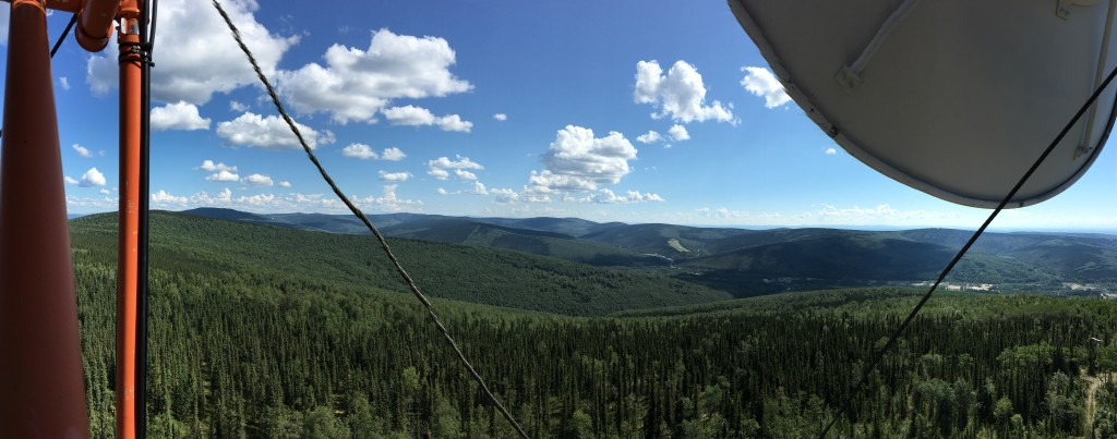 Alaska boreal forest
