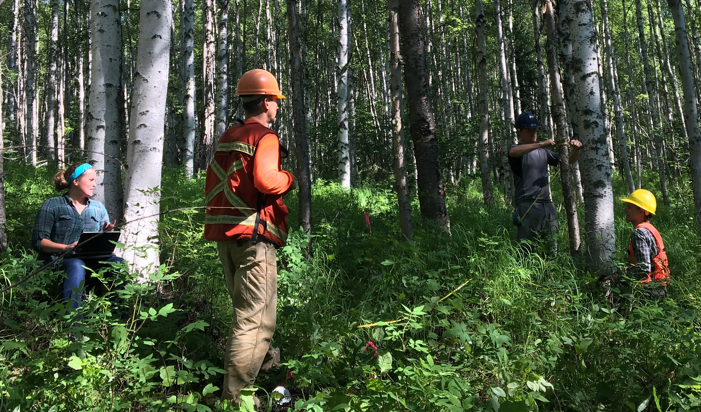 Taking Measure of a Remote Slice of Alaskan Forest - NASA ...