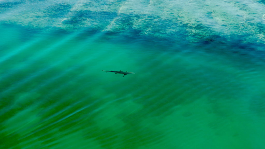 Shark swims in a harbor