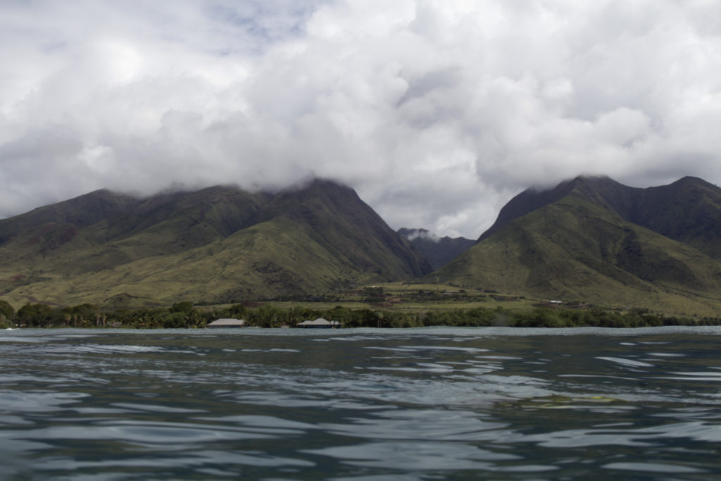 A view from the water of the lush vegetation on Maui. Credit: BIOS/Stacy Peltier
