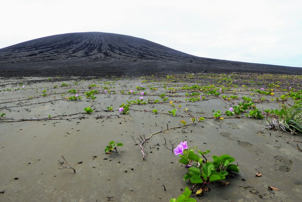 Vegetation taking root on the flat isthmus of Hunga Tonga-Hunga Ha'apai. The volcanic cone is in the background. Credit: Dan Slayback
