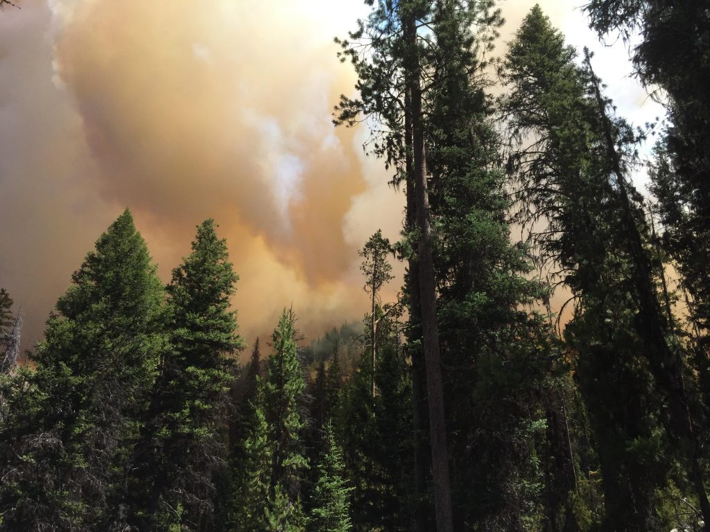 The Shady Fire seen from the ground in the Salmon-Challis National Forest on Friday, June 26. Credit: U.S. Forest Service