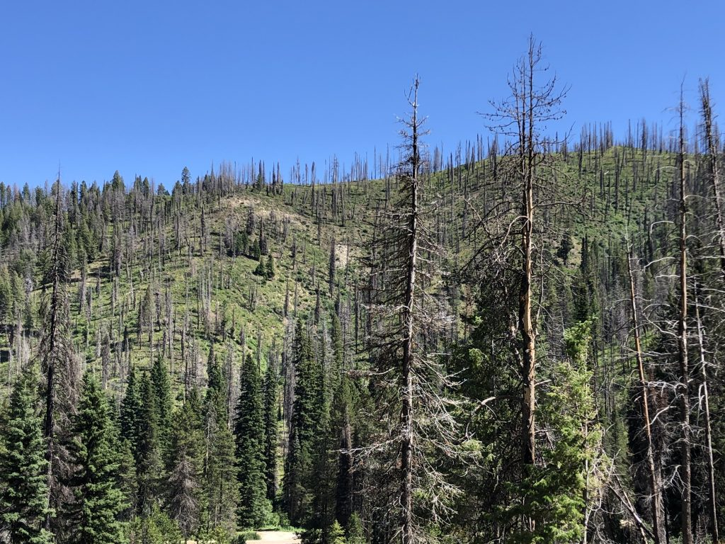 Burned trees and recovering undergrowth at varying stages make up the National Forests along Highway 21 in Idaho. July 24, 2019. Credit: NASA