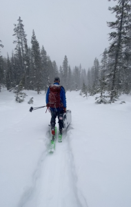 SnowEx scientists trek to the study site on cross-country skis. Credit: G. Antonioli