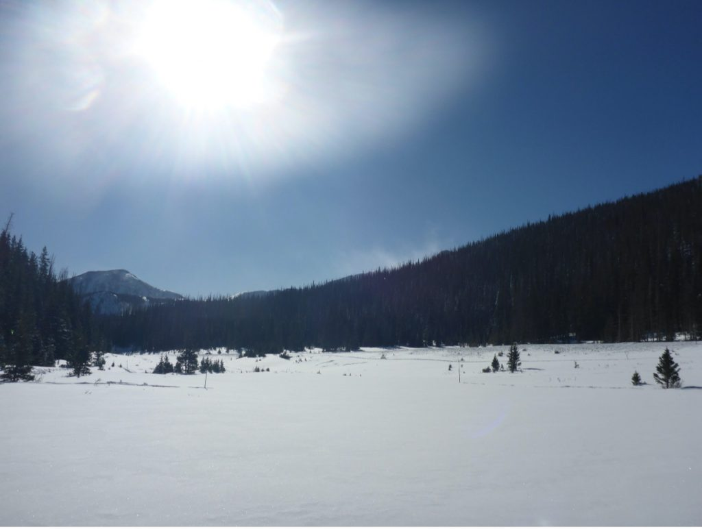 The field site at Cameron Pass, Colorado.