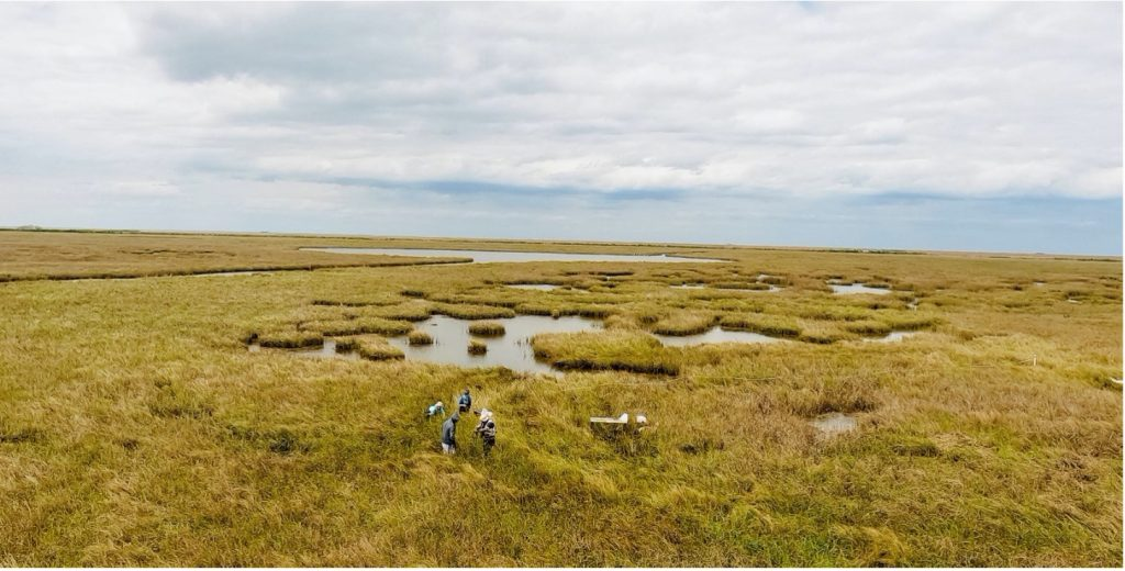 Scientists gather field samples and data from a marsh in coastal Louisiana