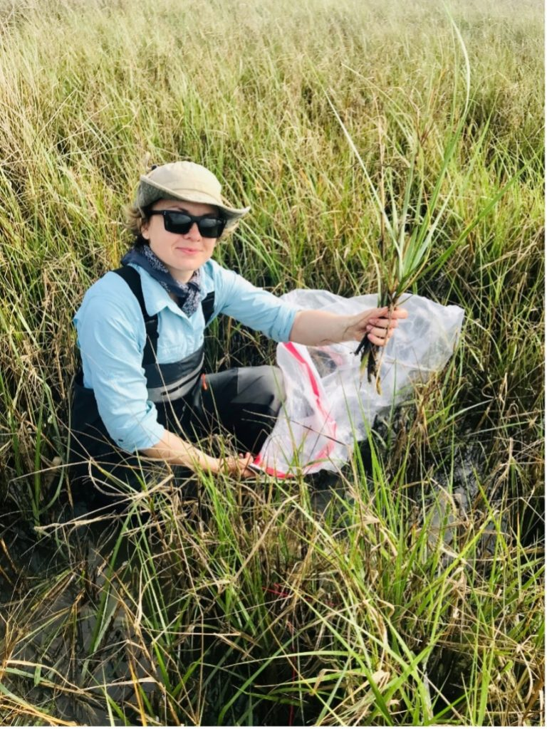 Solohin gathering vegetation samples as part of her field work in coastal Louisiana.
