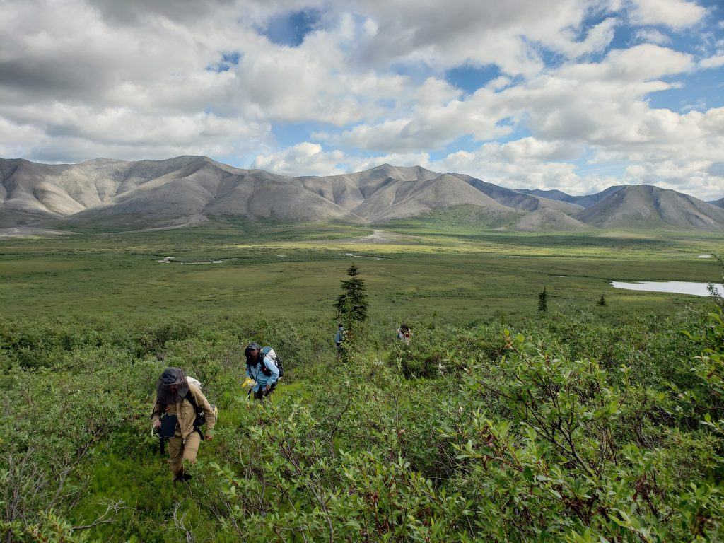 Researchers from Northern Arizona University traveled on an 11-day segment with Alaska Pacific University scientists, who completed a summer-long trek through the western Brooks Range in northern Alaska. Photo Courtesy Logan Berner