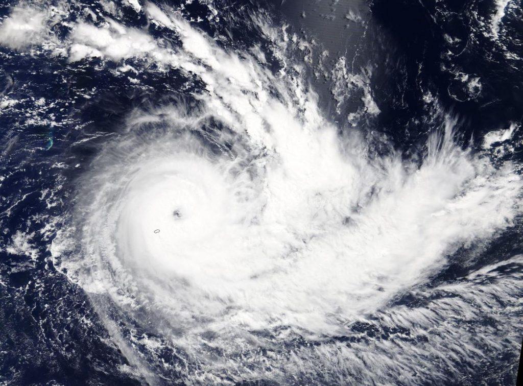 Terra image of Joaninha