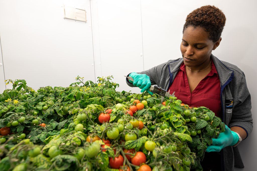 Lashelle Spencer, plant scientist with the Laboratory Support Services and Operations (LASSO) contract at NASA's Kennedy Space Center in Florida, takes measurements on 'Red Robin' dwarf tomato plants, Jan. 10, 2019, inside a laboratory in the spaceport's Space Station Processing Facility.