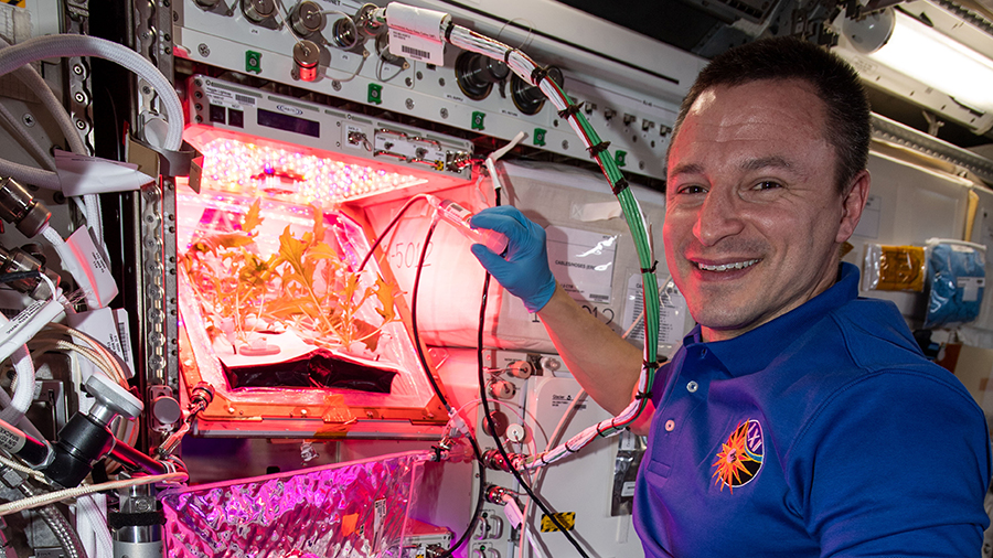 NASA astronaut Andrew Morgan waters plants on the station