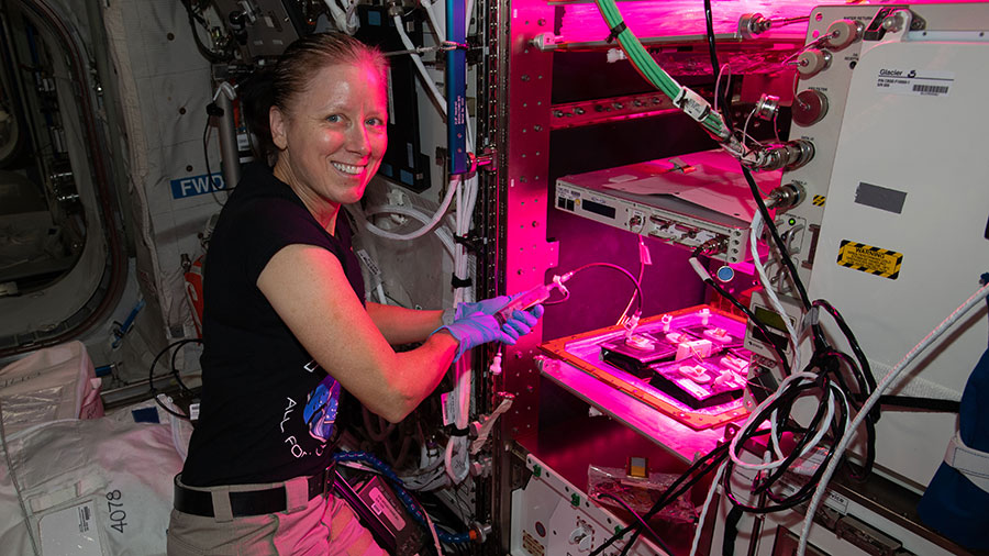 Flight Engineer Shannon Walker tends to plants growing inside the Veggie plant growth facility for a space botany study.