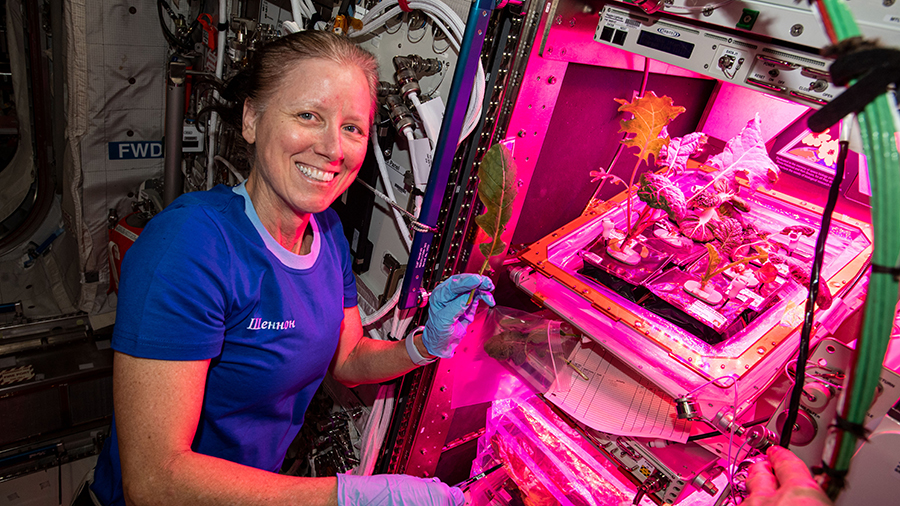 Expedition 64 Flight Engineer Shannon Walker collects leaf samples from plants growing inside the European Columbus laboratory.