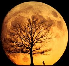 Rising moon with tree in silhouette