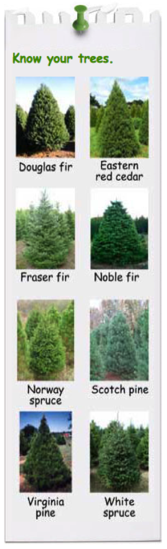 Know your trees: Images of a Douglas Fir, Eastern Red Cedar, Fraser Fir, Noble Fir, Norway Spruce, Scotch Pine, Virginia Pine and White Spruce