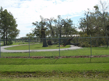 Tree damage at JSC from Hurricane Ike