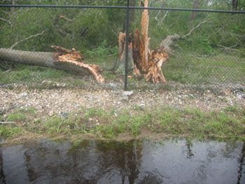 Fallen tree at JSC from Hurricane Ike